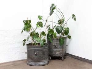 Industrial reclaimed vintage steel wheelbarrow planters
